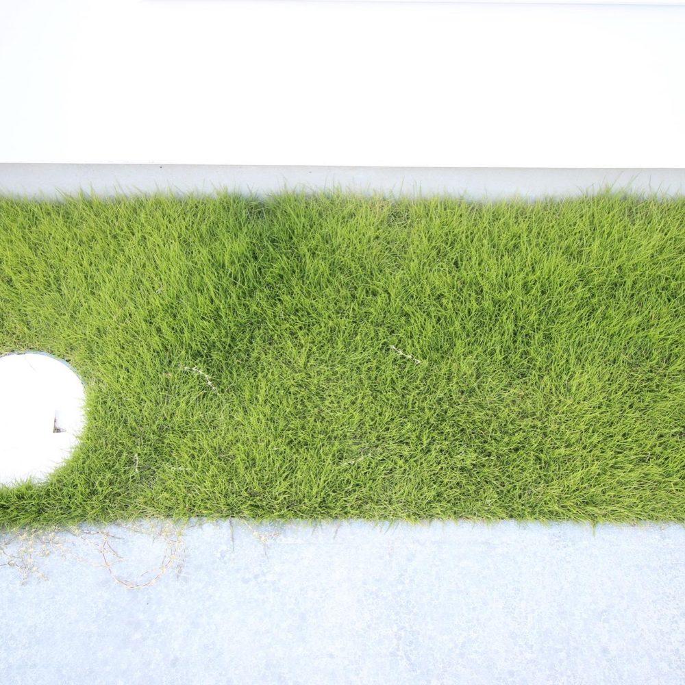 夏の芝生/窓の家と生活