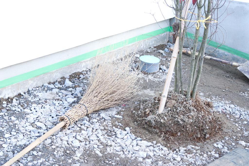 やまぼうしくんと芝生とコンクリート