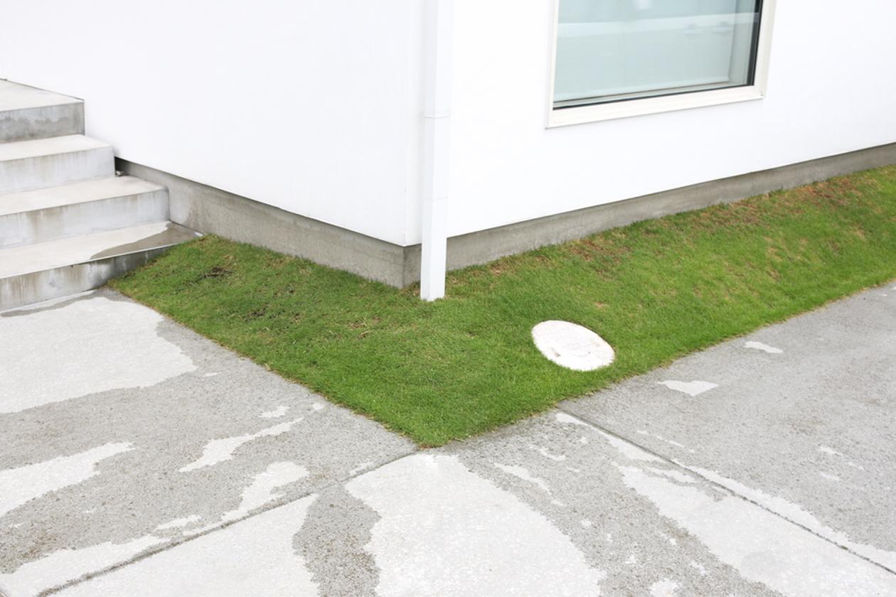 芝生のこと